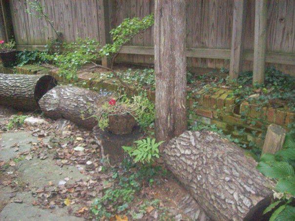carrie log border