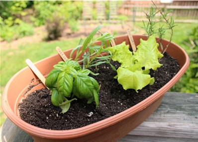 Save Money and Enhance Your Meals: How to Plant a Simple Herb Garden on Your Deck