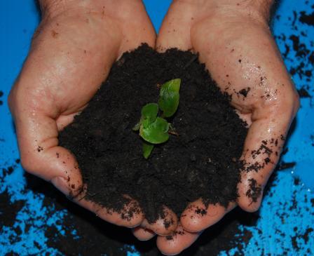 reduce your environmental impact