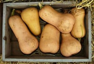 How to cook butternut squash and recipes