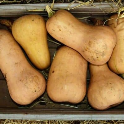 How to Cook Butternut Squash and Recipes to Get You Started